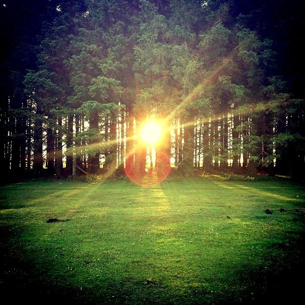 Sun beam in the woods