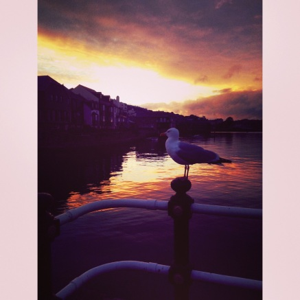 Sunset and the seagull